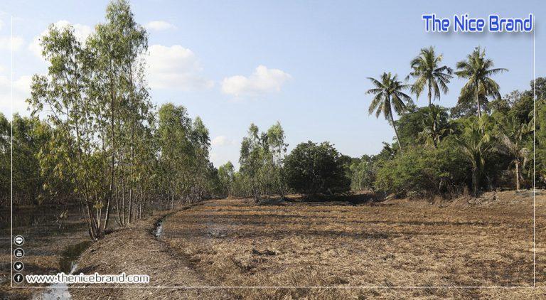 ท็อปส์ พลิกฟื้นอาชีพเกษตรกรอุบลฯ หลังน้ำท่วม